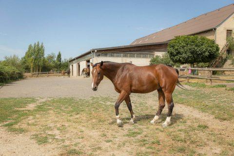 Pferd vor Stall